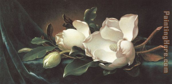 Martin Johnson Heade Magnolia Blossoms on Blue Velvet Art Painting