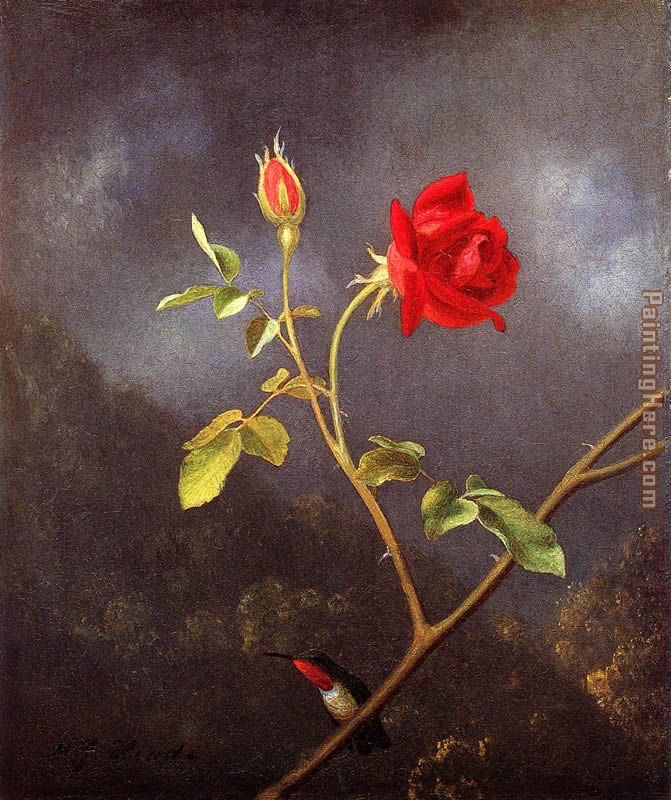 Red Rose with Ruby Throat painting - Martin Johnson Heade Red Rose with Ruby Throat art painting