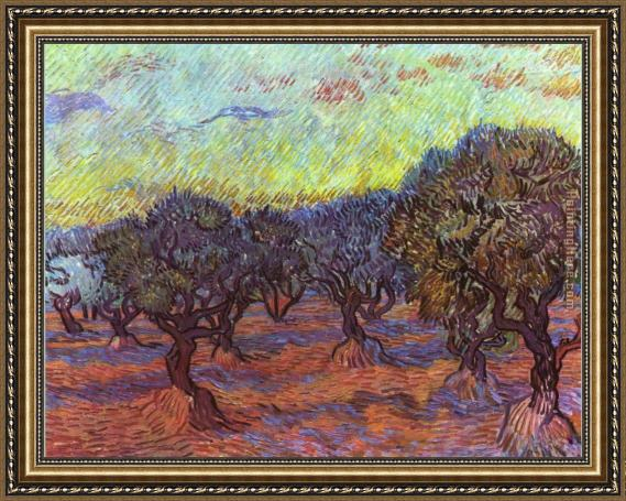 Vincent van Gogh Olive grove Framed Painting