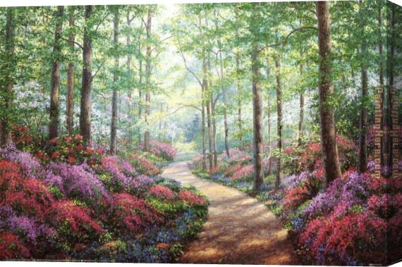 Unknown Artist Woodland Walk Stretched Canvas Painting