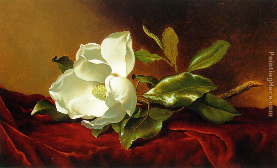 A Magnolia on Red Velvet painting - Martin Johnson Heade A Magnolia on Red Velvet art painting