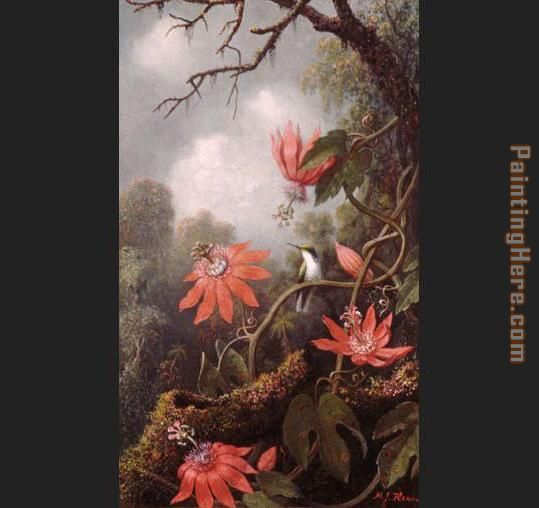 Martin Johnson Heade Hummingbird and Passionflowers Art Painting